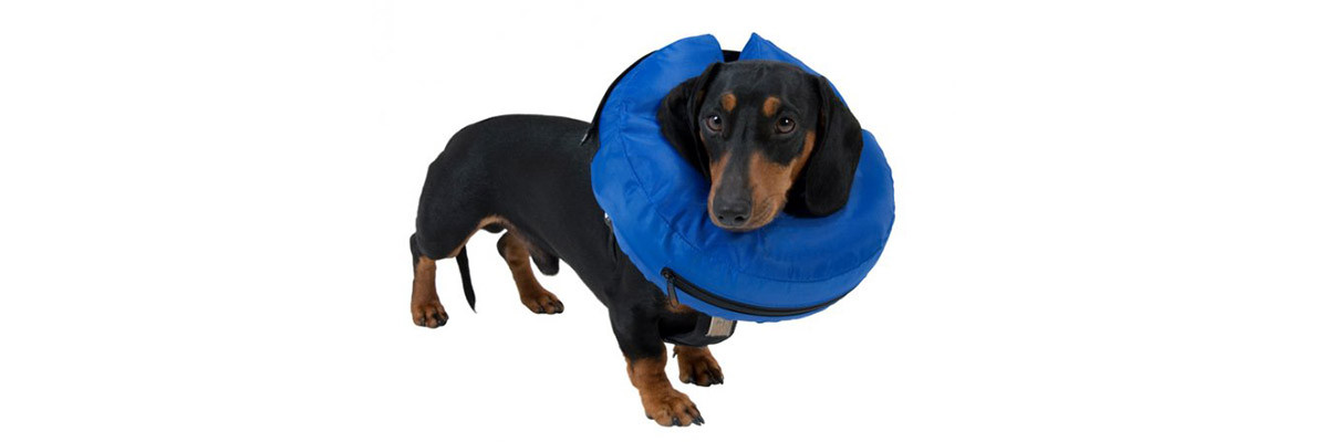 Buster hondenkraag